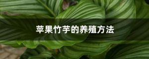蘋果竹芋的養殖方法